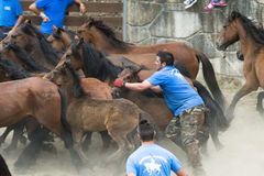 Pferdemesse stockfoto