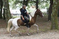Pferdemesse Lizenzfreie Stockfotos