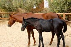 Pferdemutter und ihr junges Fohlen stockbild