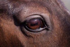 Pferden-Auge lizenzfreie stockbilder
