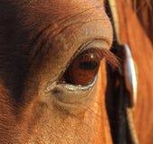 Pferden-Auge lizenzfreie stockfotos
