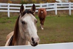 Pferden-Bauernhof Lizenzfreie Stockfotos