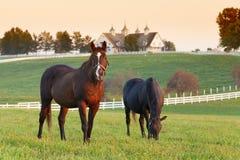 Pferden-Bauernhof Lizenzfreies Stockfoto