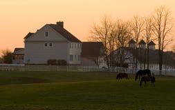Pferden-Bauernhof Stockfoto