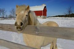Pferden-Bauernhof im Winter Lizenzfreies Stockbild