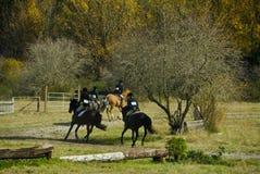 Pferden-Erscheinen-Weide-Feld lizenzfreies stockfoto