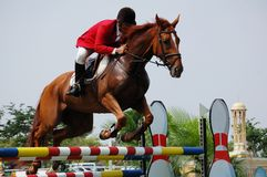 Pferden-Erscheinenspringen Stockfotos