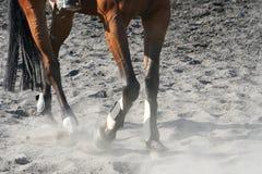 Pferden-Fahrwerkbeine lizenzfreie stockfotografie