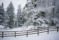 Pferden-Hürde im Winter-Schnee stockbild