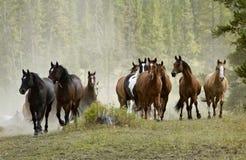 Pferden-Herde auf Hügel Lizenzfreies Stockfoto