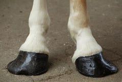 Pferden-Hufe lizenzfreie stockfotos