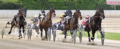 Pferden-Italienerlaufen Stockbild