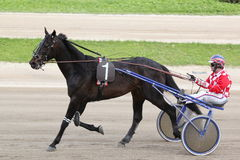 Pferden-Italienerlaufen: der Sieger Lizenzfreies Stockbild