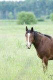 Pferden-Kopf Stockbild