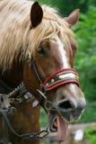 Pferden-Kopf Lizenzfreie Stockfotos