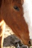 Pferden-Kopf stockbilder