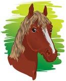 Pferden-Kopf lizenzfreie abbildung