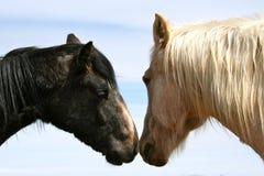 Pferden-Kuss Lizenzfreies Stockfoto