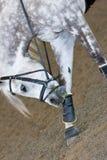 Pferden-Löschen Lizenzfreie Stockfotos
