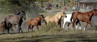 Pferden-Laufwerk mit Cookout im Hintergrund Lizenzfreies Stockfoto