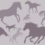 Pferden-Muster Stockbilder