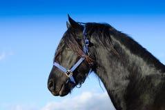 Pferden-Portrait Stockbilder