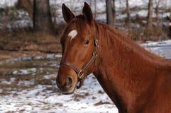 Pferden-Portrait stockfotografie