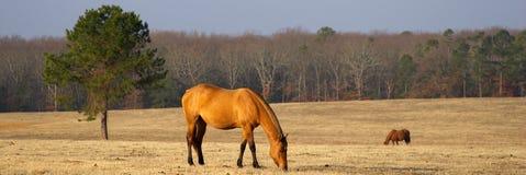 Pferden-Ranch Lizenzfreies Stockbild