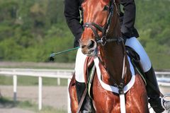 Pferden-Reiten Stockfotos