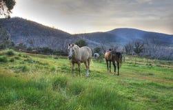 Pferden-Reitfeiertags-Landschaft Stockfotos