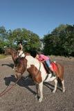 Pferden-Reitvergnügen Stockfotos