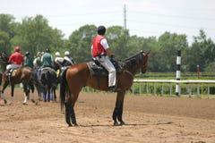 Pferden-Rennen lizenzfreie stockfotografie