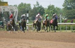 Pferden-Rennen stockfotos