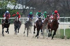 Pferden-Rennen. Stockfoto