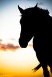 Pferden-Schattenbild Stockfotografie