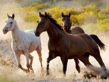 Pferden-Spiel Stockbild