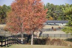Pferden-Ställe und Pferde Stockfotos