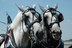 Pferden-Team Lizenzfreies Stockfoto