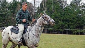 Pferden-Training Lizenzfreies Stockfoto