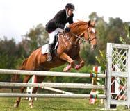Pferden- und Jockeyspringen Stockfotos