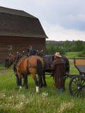 Pferden-Wagen Lizenzfreie Stockbilder