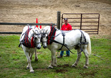 Pferden-Zug-Konkurrenz Stockfotos