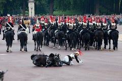 Pferdenabdeckungfall Stockfoto