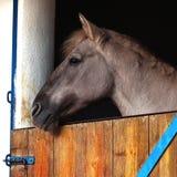 Pferdenahes hohes Stockfoto