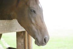 Pferdenahes hohes Gesicht Stockfoto