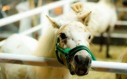Pferdenase Stockfoto