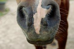 Pferdenase/-mund Lizenzfreies Stockfoto