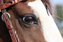 Pferdenauge Lizenzfreie Stockbilder