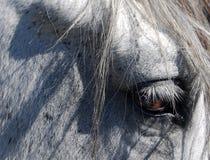 Pferdenauge Stockfotografie