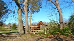 Pferdenbauernhof Stockbild